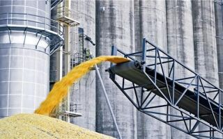 Словарь основных понятий по теме качества зерна