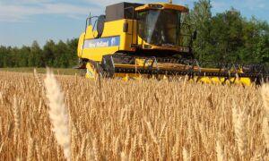 2.1. Характеристики зерна как объекта сушки