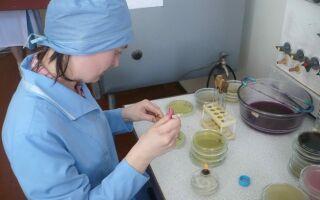 Контроль правильности определения количества и качества партий зерна и продуктов его переработки